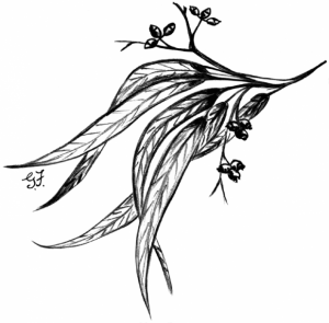 Candlebark-Nursery-logo-619x609